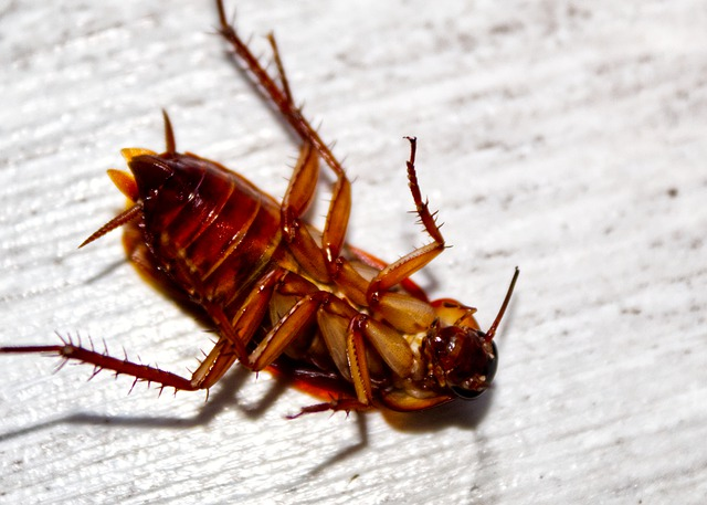 if roaches can get in and out of microwave